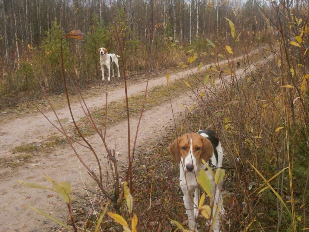 журнал охота и охотничья собака