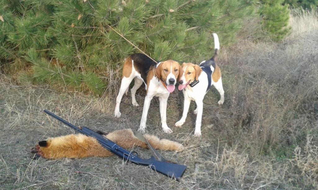 Купить собаку для охоты