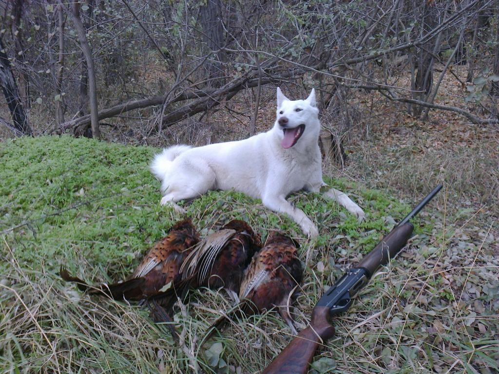 лайки охота2