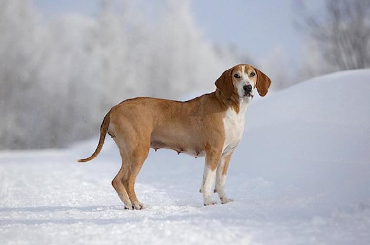 hygenhund 2
