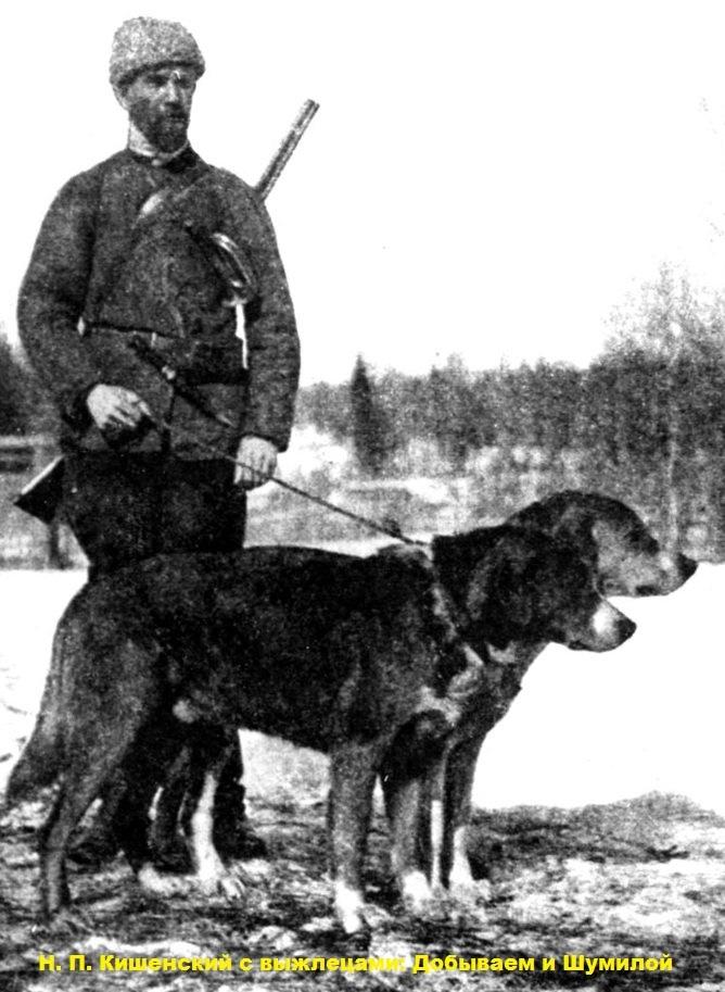 кишенский