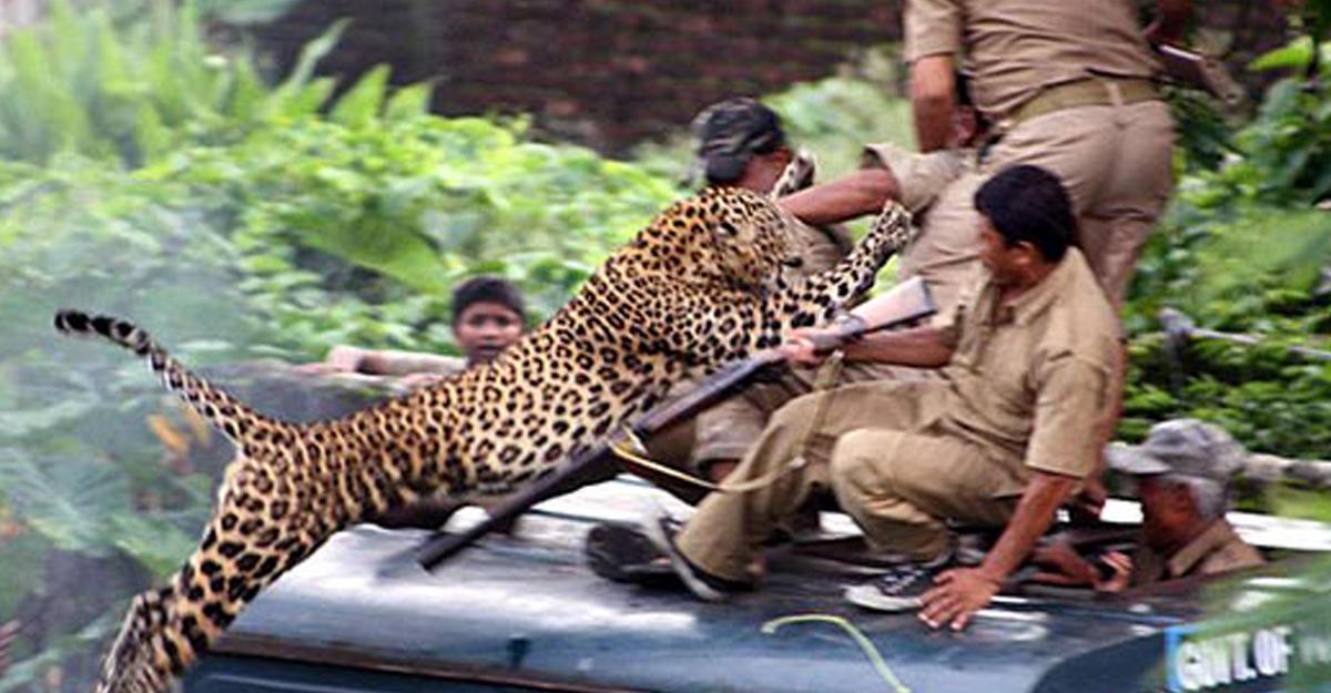 leopardind4