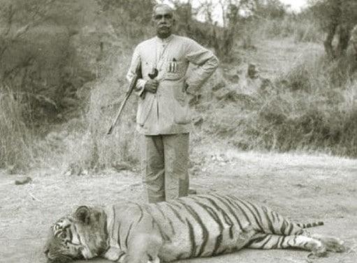 tigr hunt26