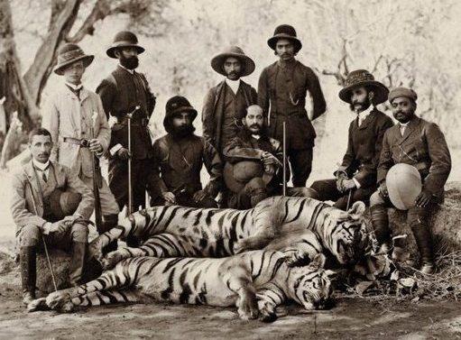 tigr hunt27
